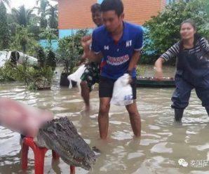 洪水中,泰国灾民把逃出来的鳄鱼吃了