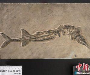 加拿大向中国归还数件流失文物及化石
