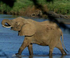 外媒:津巴布韦证实卖给中国35头大象缓解经济问题