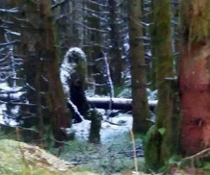 """英国女子所拍森林照片中惊现神秘""""大脚怪"""""""