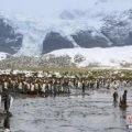 阿布扎比一公司拟拖回南极冰山 供百万人5年用水