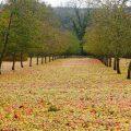 """爱尔兰苹果园暴风雨过后现""""苹果地毯""""奇观"""