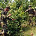 """印媒:印度毛派游击队跳出""""红色走廊"""" 转战中印边境"""