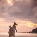 澳大利亚想在中国打广告 欲鼓动中国人去消费旅游