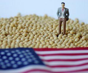 中国买家要求推迟发货 美国大豆积压程度前所未有