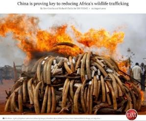 非媒:中非合作打击野生动物走私成果丰硕