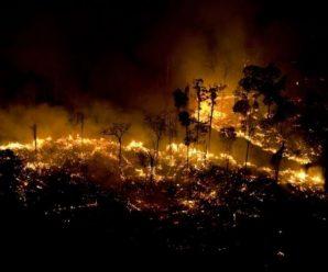 亚马孙森林烧了16天 巴西为何现在才重视
