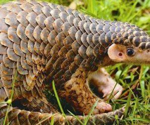 我国全面禁止非法野生动物交易 革除滥食野生动物陋习