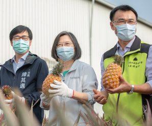 """环球社评:台当局对""""禁菠萝""""想得很多盖因心虚"""